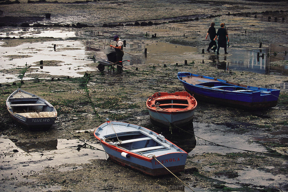 Harvesting mussels at low tide at Vilagracia, Galicia, North West Spain.