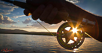 Sun shining through a fly reel.