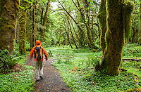A man walking on a trail in the Quinault Rainforest, Olympic National Park, Washington.