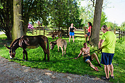 Peach Bottom, Pennsylvania - May 17, 2017: (L-R) Ruby Rublesky, Mika McDougall, Chris McDougall, and Don Korenkiewicz, hang out under shade on the MdDougall's front yard after going on a late morning donkey run Wednesday May 17, 2017. <br /> <br /> <br /> Chris McDougall and his rescue donkey Sherman regularly run with a group of two other runners and two donkeys among the Amish farms in rural Pennsylvania.<br /> <br /> CREDIT: Matt Roth for The New York Times<br /> Assignment ID: 30206505A