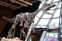 The skeleton of a Theropod dinosaur before the start of an auction on the Eiffel Tower. The 8,7 metre long dinosaur skeletion was discovered in the US state Wyoming with French data from the auction house Aguttes. The estimated price lies between 1,2 and 1,8 million euros. Paris, France, June 4, 2018. Photo by Alain Apaydin/ABACAPRESS.COM•Dinosaure •Squelette •Vente aux encheres