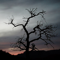 Creepy Tree at Dusk in Sedona, Arizona. Image taken with a Nikon 1 V2 camera and 32 mm f/1.2 lens (ISO 200, 32 mm, f/1.2, 1/100 sec). Nikonians ANPAT-13 Day 2.