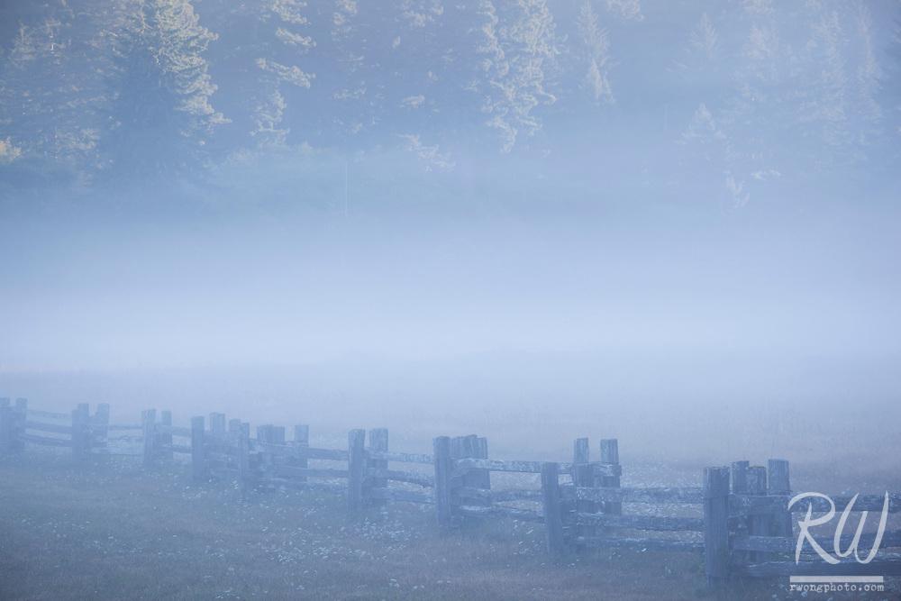 Foggy Morning at Boyes Prairie, Prairie Creek Redwoods State Park, California