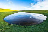 Farm dam amongst wheat and canola fields; Bredasdorp; South Africa
