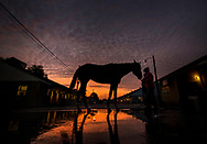LOUISVILLE, KY - APRIL 30:  A horse gets a bath at Churchill Downs on April 30, 2017 in Louisville, Kentucky. (Photo by Alex Evers/Eclipse Sportswire/Getty Images)