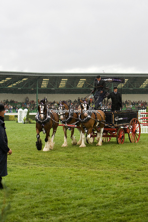 Great Yorkshire Show 2010  Heavy Horse Team Turnouts