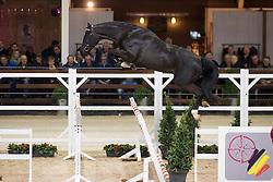 034, Nubick van het Mettenhof<br /> BWP Hengsten keuring Koningshooikt 2015<br /> © Hippo Foto - Dirk Caremans<br /> 23/01/16