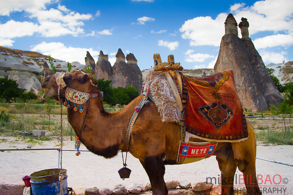 Camel and Fairy chimneys. Pasa Bagi. Cappadocia, Turkey.