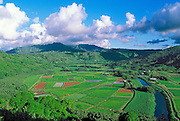 Afternoon light on the taro fields of the Hanalei Valley, Island of Kauai, Hawaii