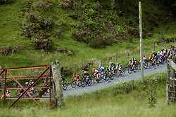 The peloton speed by at Stage 5 of 2019 OVO Women's Tour, a 140 km road race from Llandrindod Wells to Builth Wells, United Kingdom on June 14, 2019. Photo by Sean Robinson/velofocus.com
