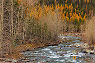 Bear Creek in autumn in the Flathead National Forest, Montana, USA