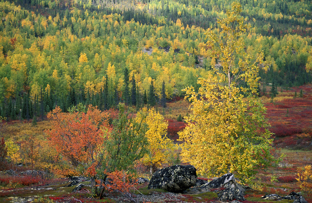 Fall Foliage along Dalton Highway near Finger Mountain, Alaska, USA