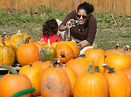 New Hampton, New York - A woman takes a photograph of a child sitting by pumpkins at Soons Orchards on Oct. 11, 2010, the day the family-owned business was celebrating its 100th birthday.