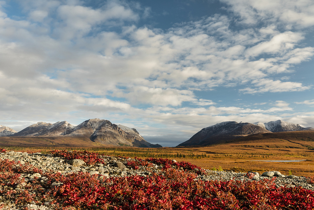 Early morning light on Bearberry (Arctostaphylos uva-ursi) and Landmark Gap along the Denali Highway in Southcentral Alaska. Autumn.