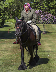 The Queen rides Balmoral Fern, a 14-year-old Fell Pony, in Windsor Home Park over the weekend. The Queen has been in residence during the coronavirus pandemic at Windsor Castle, Windsor, Berkshire, UK, on the 1st June 2020. Picture by: Steve Parsons/WPA-Pool. 01 Jun 2020 Pictured: Queen, Queen Elizabeth II. Photo credit: MEGA TheMegaAgency.com +1 888 505 6342
