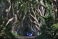 Dark hedges near armoy