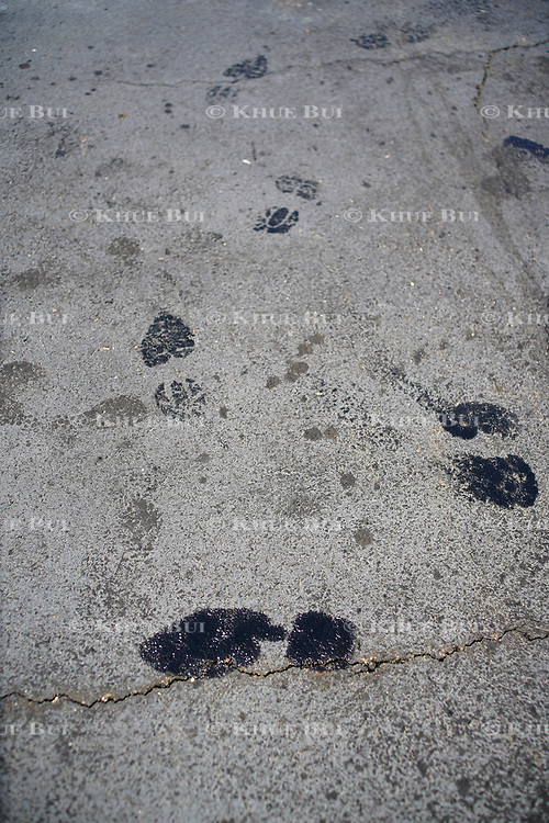 Shoe prints track oil from a leaking B-25 bomber at Chesterfield Airport Saturday, May 12, 2018, in Chesterfield, VA.<br /> <br /> Photo by Khue Bui