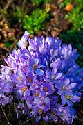 Abkhazi Garden,Victoria,Vancouver Island, Brithish Columbia, Canada