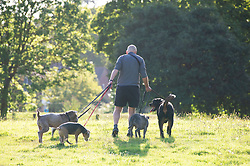 ©Licensed to London News Pictures 29/08/2019.<br /> Sidcup ,UK. An early morning for this dog walker in the sunny weather at Footscray Meadows in Sidcup, South East London.Photo credit: Grant Falvey/LNP