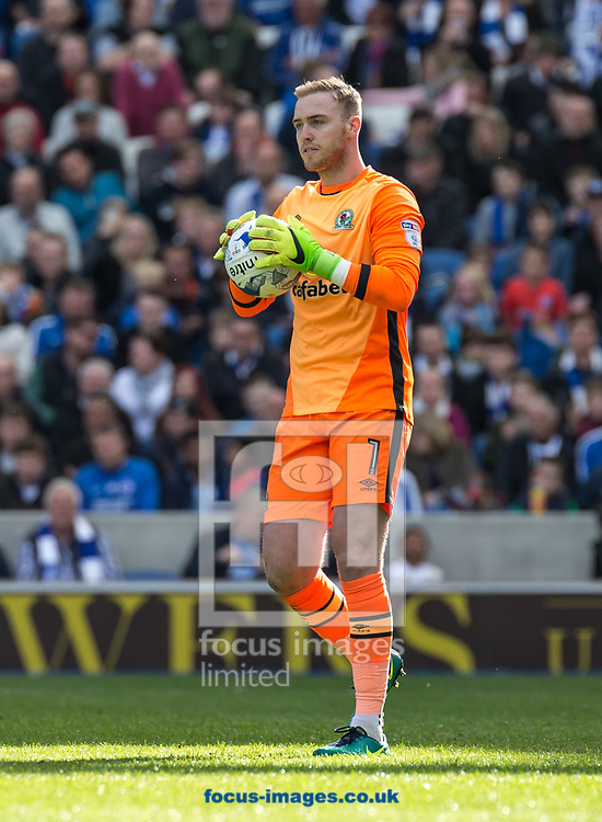 Goalkeeper Jason Steele of Blackburn Rovers during the Sky Bet Championship match at the American Express Community Stadium, Brighton and Hove<br /> Picture by Liam McAvoy/Focus Images Ltd 07413 543156<br /> 01/04/2017