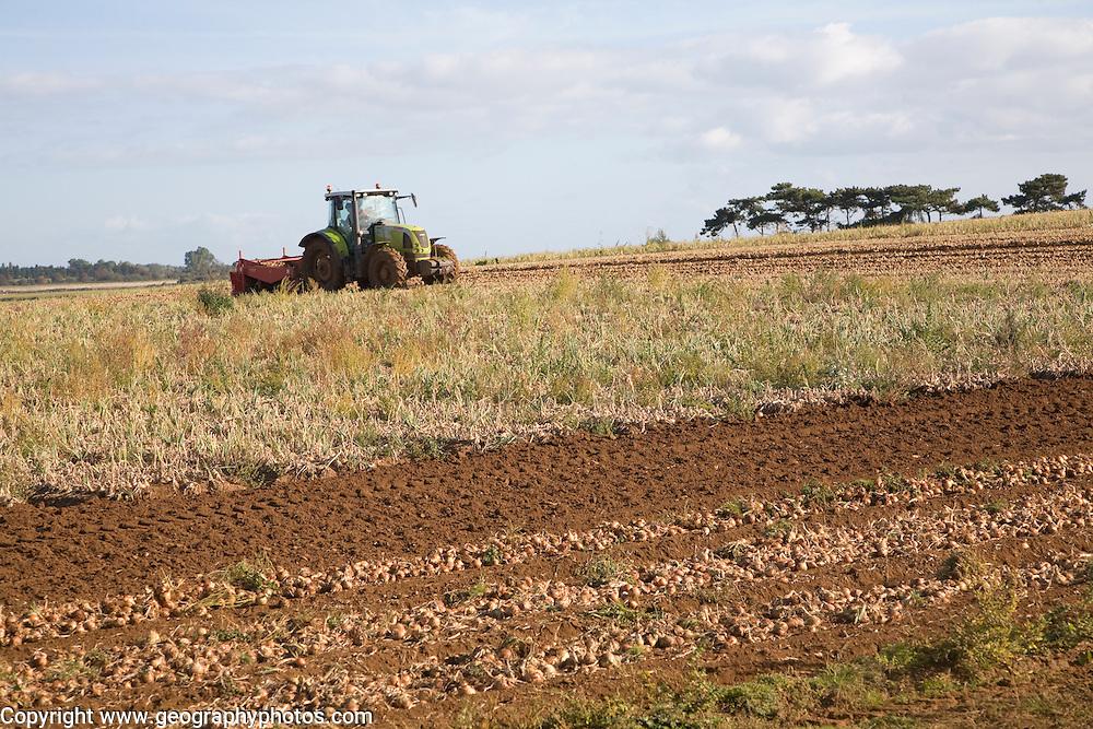 Tractor harvesting onion crop, Alderton, Suffolk, England