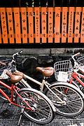 Street scenes in Gion.