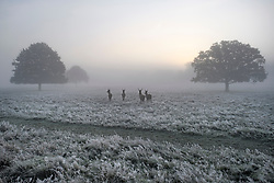 © Licensed to London News Pictures. 08/11/2019. London, UK. Deer graze in a frost and fog covered landscape at Richmond Park in west London on a bright Autumn morning. Parts of the north of England have experienced severe flooding following torrential rainfall. Photo credit: Ben Cawthra/LNP