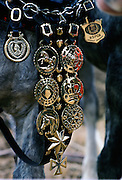 Horse Brasses on a Shire Horse, England, United Kingdom.