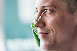 © Licensed to London News Pictures. 03/01/2017. London, UK. A Preying Mantis crawls across Zookeeper Jamie Mitchell's face at the London Zoo annual stocktake. Photo credit: Rob Pinney/LNP