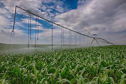 Pivô de irrigação sobre plantação de milho na zona rural de Perdizes, Minas Gerais. FOTO: Jefferson Bernardes/Agência Preview