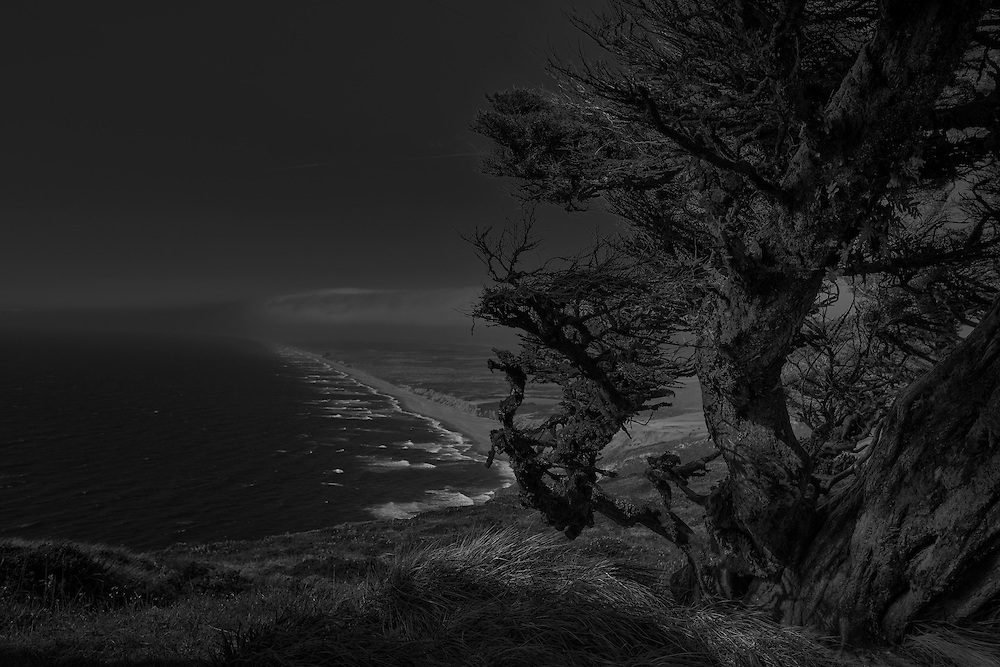 One of my favorite shots from 2014. An old windswept cypress tree keeps watch over the Pacific.