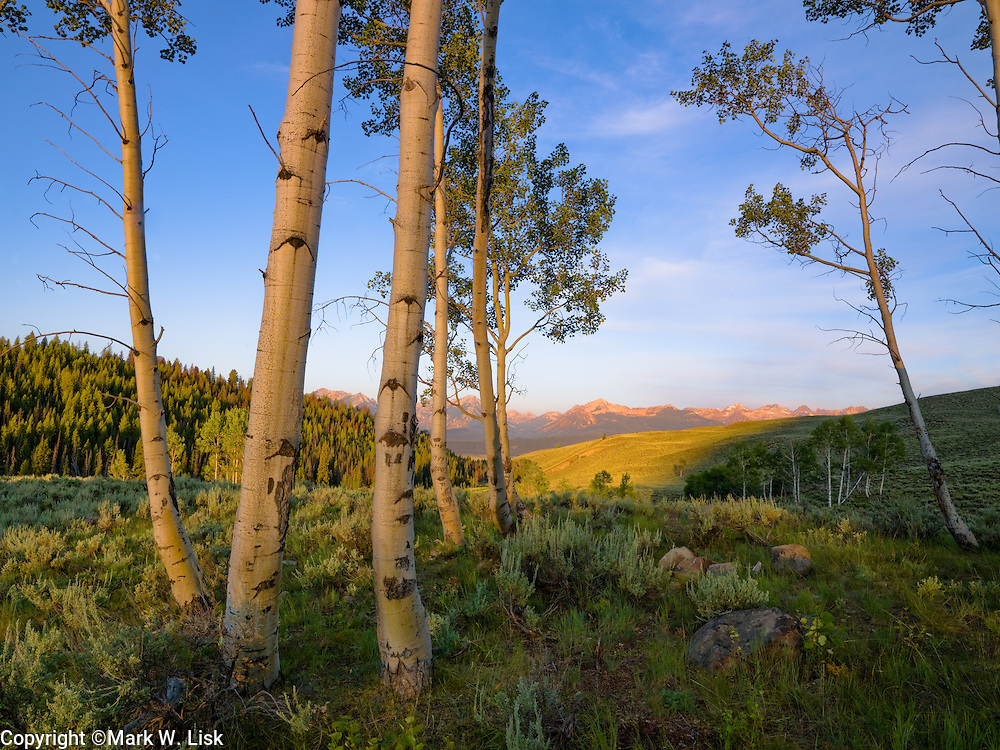 Aspen thrive on the open slopping hillsides in the Sawtooth Recreation Area.