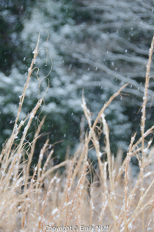 Zooming in for a tight shot allowed for a simple composition and contrast of the switchgrass and snow against the dark background.