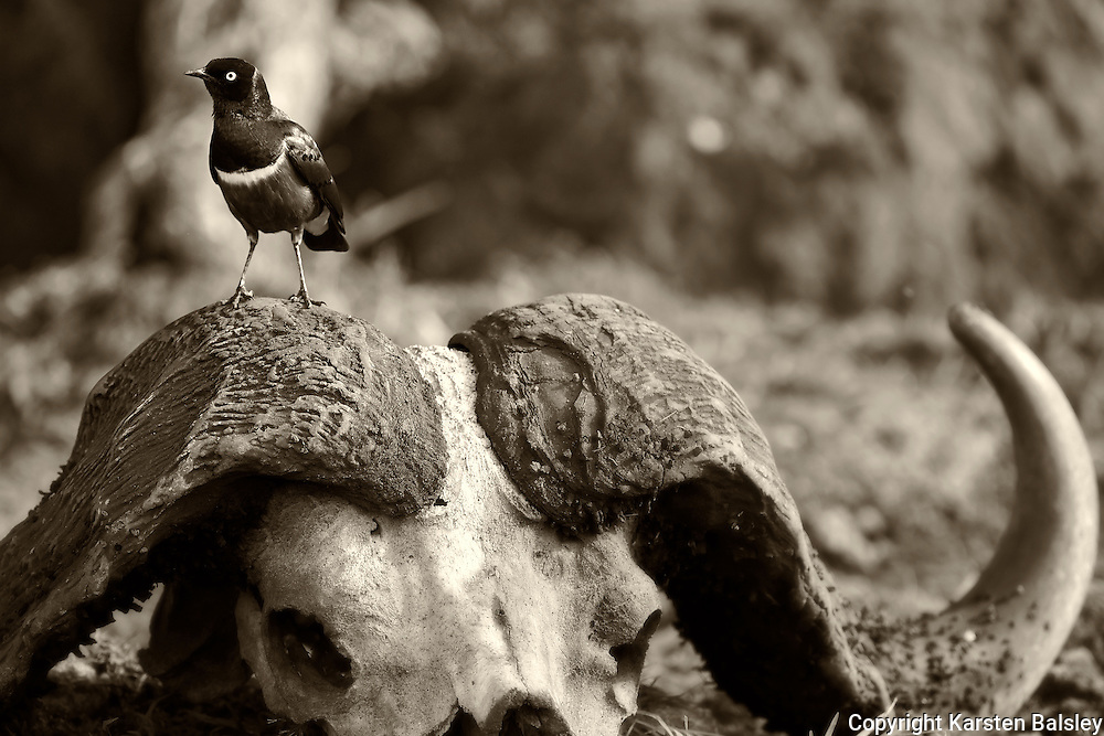 &ldquo;Resting Place&rdquo;                                              Tanzania<br />