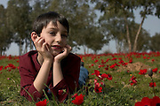 A young boy Admiring the red poppies