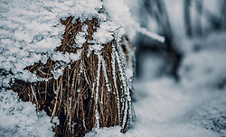 THEMENBILD - gefrorener Schnee an getrocknetem Grasballen, aufgenommen am 04. Jänner 2020 in Kaprun, Oesterreich // frozen snow on a dried bale of grass, in Kaprun, Austria on 2020/01/04. EXPA Pictures © 2020, PhotoCredit: EXPA/Stefanie Oberhauser
