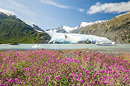 A tour boat explores Portage Lake with Portage Glacier in the background in the Chugach National Forest of Portage Valley in Southcentral Alaska. Summer. Afternoon.