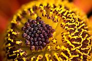 Flower macro resembling an eye