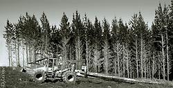 FOTÓGRAFO: Jaime Villaseca ///<br /> <br /> Tala de bosque en Constitución.