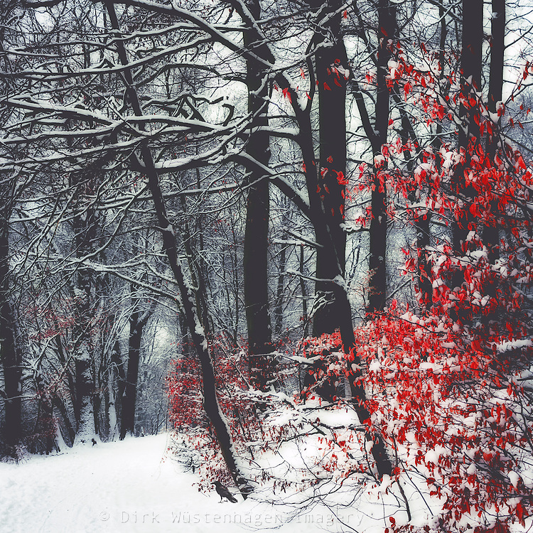 Dreamy winter forest<br /> Societs6 products: https://society6.com/product/winter-day-460_print#1=45<br /> <br /> Redbubble products: http://www.redbubble.com/people/dyrkwyst/works/20035930-winter-day