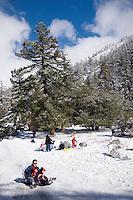 Asian Family Sledding on Fresh Snow, Mount Baldy, California