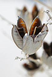 detail of a dry Yucca Plant in New Mexico