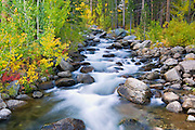 Fall color along the south fork of Bishop Creek, Inyo National Forest, Sierra Nevada Mountains, California USA