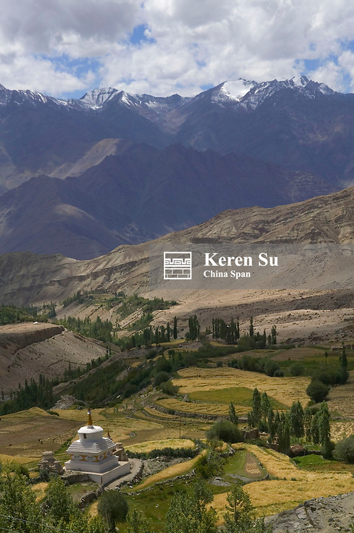 Chorten and farmlands in the valley of the Himalayas, Ladakh, India