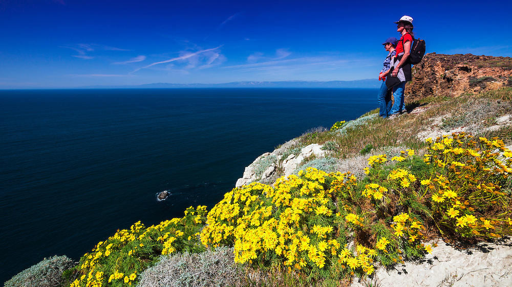 Giant Coreopsis and hikers at Cavern Point, Santa Cruz Island, Channel Islands National Park, California USA