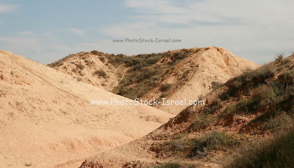 Israel, Negev plains, Nitzana a sand dune