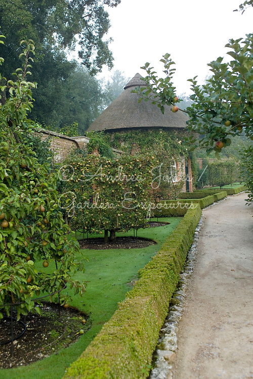 Trained fruit trees in the Fruit Garden including Pyrus communis 'Nouveau Poiteau' (pear 'Nouveau Poiteau' - close) and Pyrus communis 'Belle Julie' (pear 'Belle Julie' - far) with the thatched apple store in background.<br /> West Dean Gardens, West Sussex, England