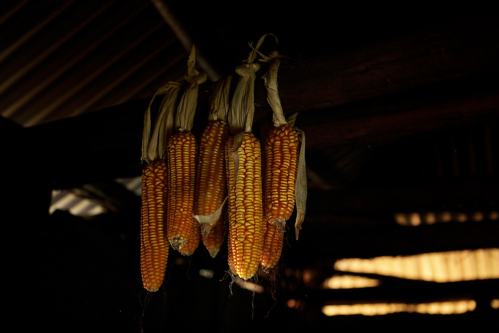 Corn hung to dry..Angeline Ngoga is a grandmother who has brought up 11 of her grand children because the parents died of aids...Asumbi, Nyanza, Kenya