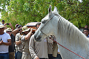 NEIGHED TO REST<br /> <br /> This is the heartbreaking moment a pet horse was overcome with grief as his late owner and ''best friend'' was buried. <br /> <br /> Cow herder Wagner Figueiredo de Lima, 34, and eight-year-old grey stallion Sereno were ''inseparable'' and spent up to 12 hours a day together. <br /> <br /> The Paraguayan cowboy struck up an ''incredible bond'' with the beast - which he had owned since birth - as they grazed cattle on the remote farm land.<br /> <br /> But Wagner was killed in a motorcycle accident in the early hours of the morning on January 1 in Rio Grande do Norte, Brazil near his home in neighbouring state Paraiba.<br /> <br /> In a touching gesture, Wagner's brother Wando led his favourite horse to his funeral on Tuesday afternoon.<br /> <br /> Incredible pictures show how Sereno could sense he had lost his friend - anxiously pacing round the hearse, sniffing the coffin, and lowering her head against the casket.<br /> <br /> The horse was even stomping his hooves and whimpering as he walked to the cemetery - before letting out a gut-wrenching neigh that sent mourners into floods of tears.<br /> <br /> Wando said: ''This horse was everything to him, it was as if the horse knew what was happening and wanted to say goodbye. <br /> <br /> ''All the way to the cemetery he would whimper and beat with his paws on the ground.''<br /> <br /> Photorgapher Kyioshi Abreu, who captured the moving scenes, said: ''The funeral was very sad. The horse knew what was happening, he knew his best friend had gone.''<br /> <br /> Sereno will now be looked after by Wando who said that the horse will ''stay in the family forever'' as a tribute to his late brother.<br /> ©Kyioshi Abreu Diario do Sertao/Exclusivepix Media