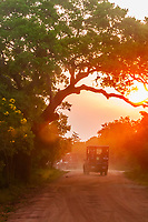 A safari vehicle at sunset, Yala National Park, Southern Province, Sri Lanka.